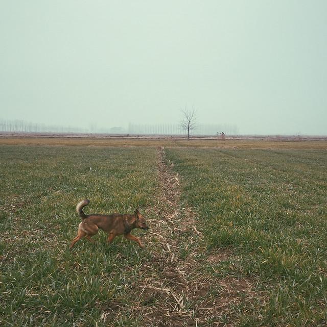 mammal-no-person-landscape-farm-field picture material