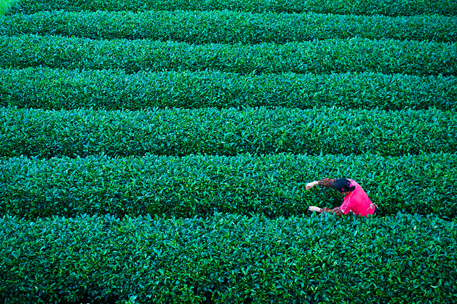 no-person-cropland-field-desktop-green picture material