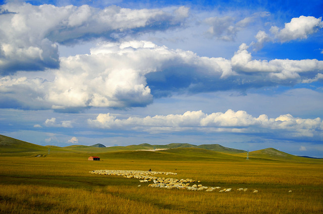 no-person-landscape-grassland-sky-agriculture picture material