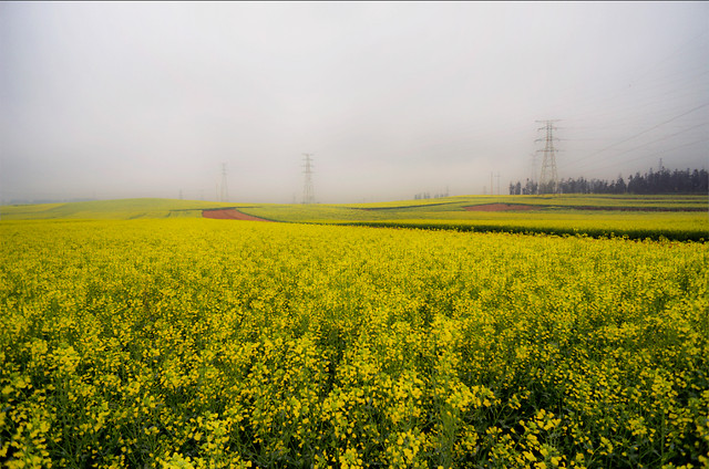 field-landscape-agriculture-farm-crop picture material