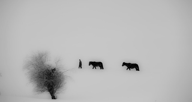 snow-winter-silhouette-black-black-white picture material