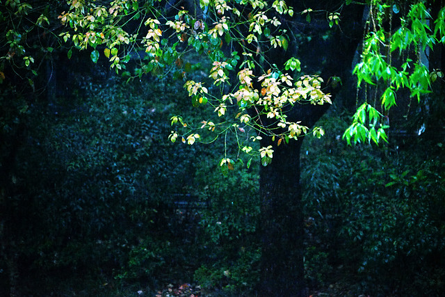 no-person-leaf-tree-wood-nature picture material