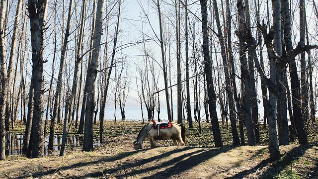 wood-tree-no-person-landscape-nature 图片素材
