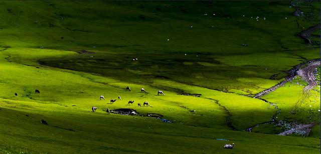 grassland-landscape-no-person-green-golf picture material