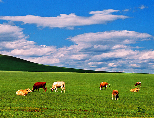 rural-pasture-agriculture-grass-pastoral picture material