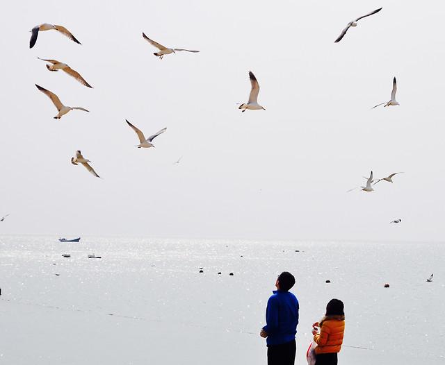 bird-wildlife-seagulls-water-beach picture material