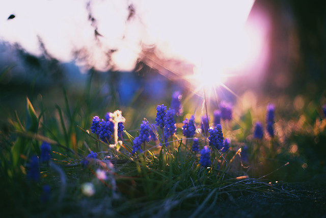 flower-grass-field-hayfield-nature picture material