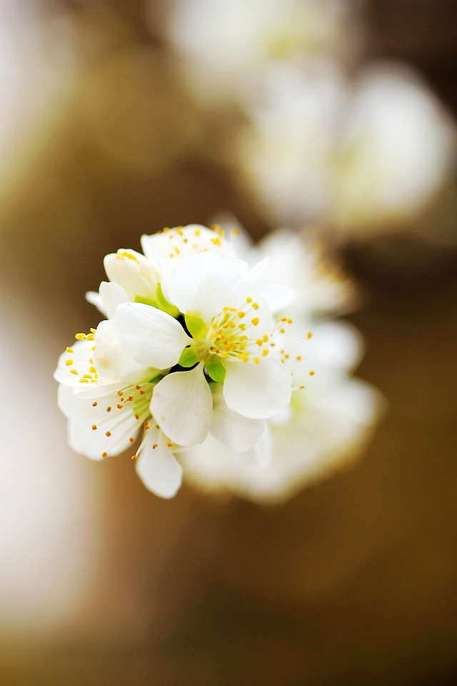nature-no-person-flower-blur-dof picture material