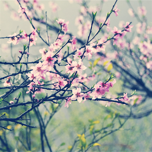 flower-nature-branch-tree-flora picture material
