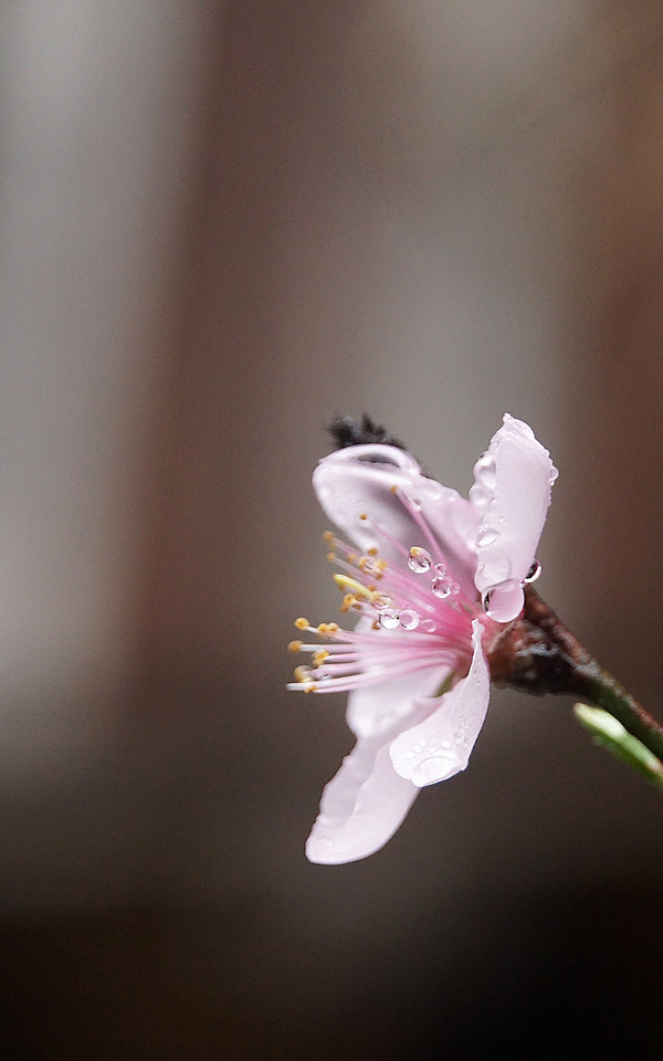 flower-nature-blur-no-person-leaf picture material