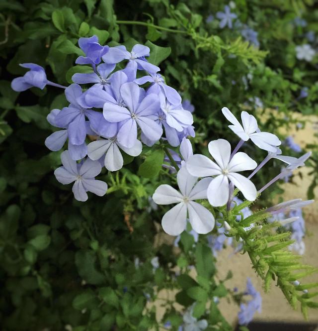 flower-flora-nature-floral-leaf 图片素材
