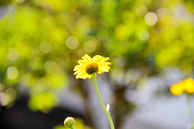 nature-flower-summer-blur-no-person picture material