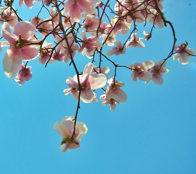 flower-branch-nature-flora-tree picture material