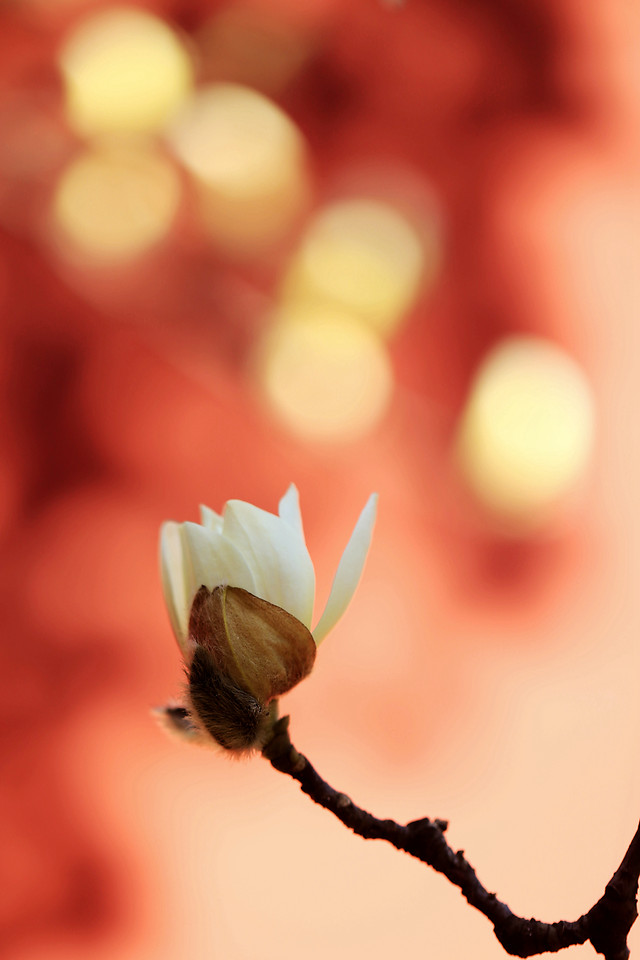 blur-no-person-nature-dof-flower picture material