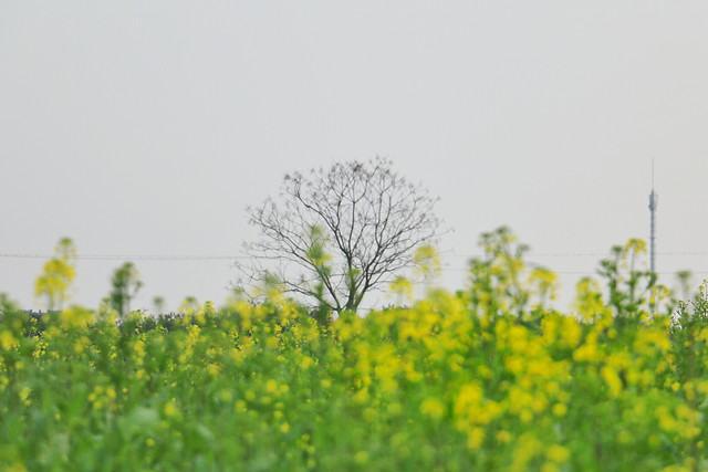 field-landscape-nature-agriculture-flower picture material