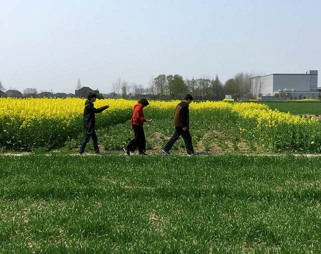 field-landscape-cropland-people-agriculture 图片素材