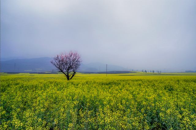 field-landscape-agriculture-nature-rural picture material