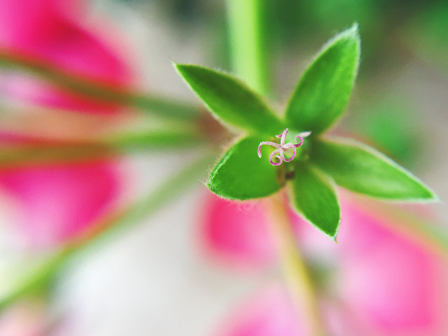 nature-leaf-flora-flower-summer 图片素材