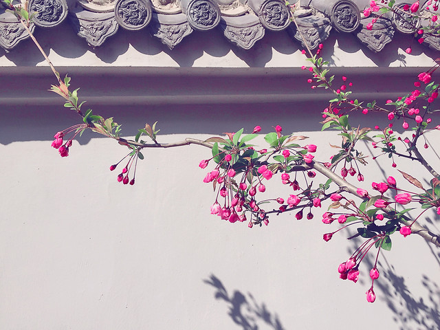 flower-branch-flora-decoration-tree picture material