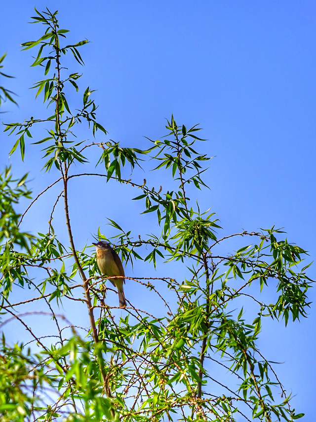 bird-nature-tree-wildlife-leaf picture material