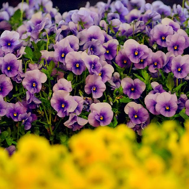 flower-nature-flora-garden-leaf picture material