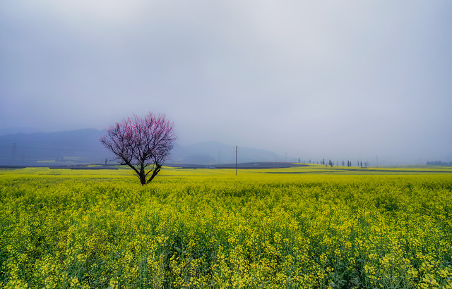 field-landscape-nature-agriculture-rural picture material