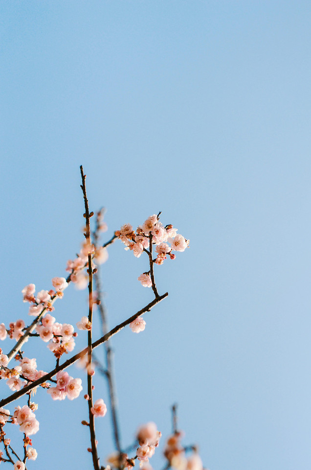 nature-sky-no-person-flower-tree picture material