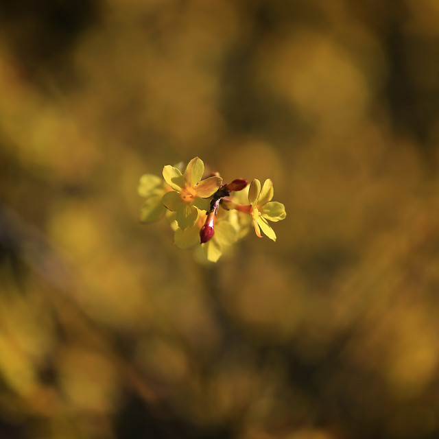 flower-no-person-blur-nature-leaf picture material