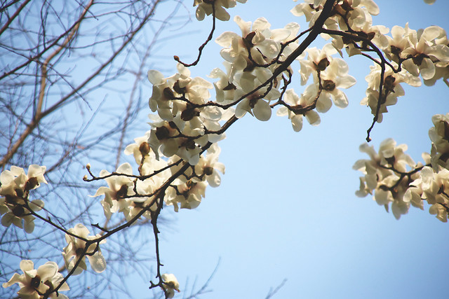 branch-tree-nature-season-flora picture material