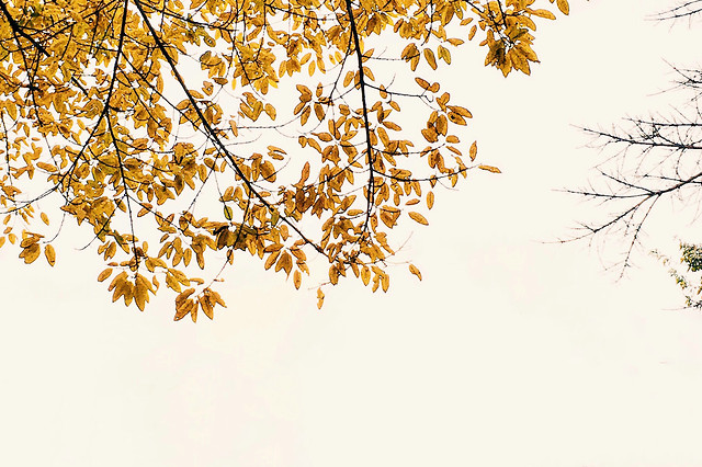 fall-leaf-branch-tree-season 图片素材