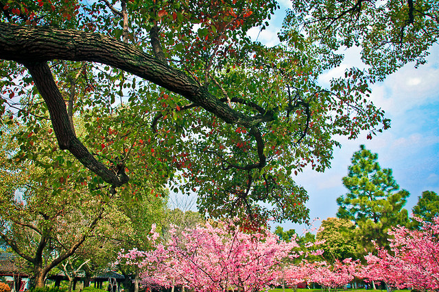 tree-nature-leaf-park-season picture material