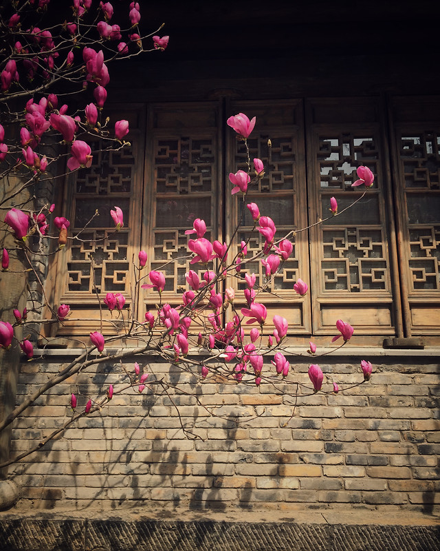 flower-architecture-window-decoration-pink picture material