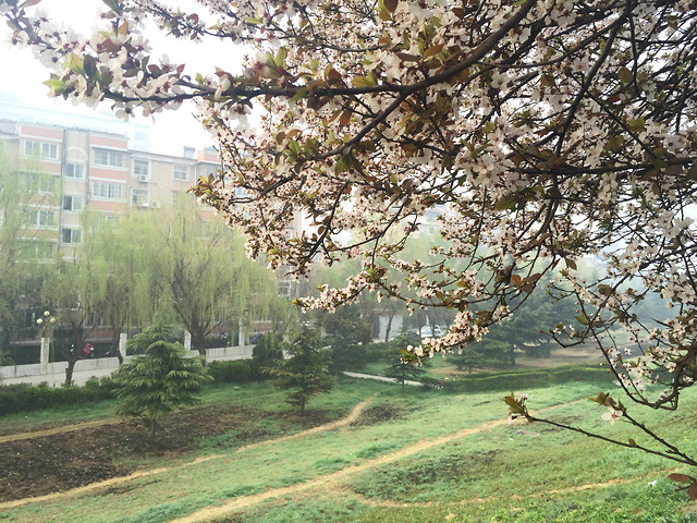 tree-landscape-flower-nature-garden picture material