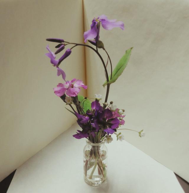 flower-bouquet-no-person-nature-flora picture material