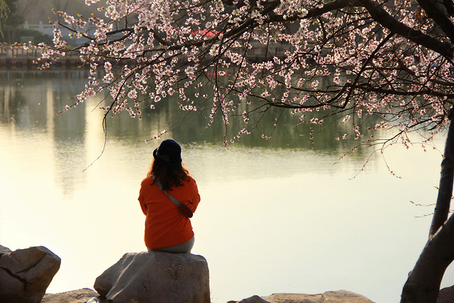 tree-landscape-water-people-dawn picture material