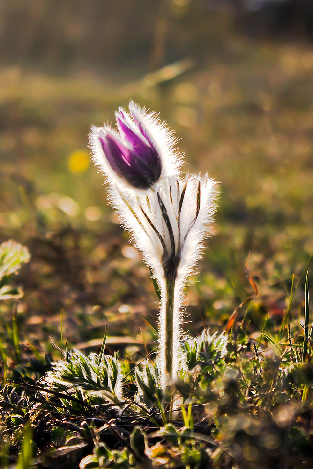 flower-nature-flora-grass-outdoors picture material