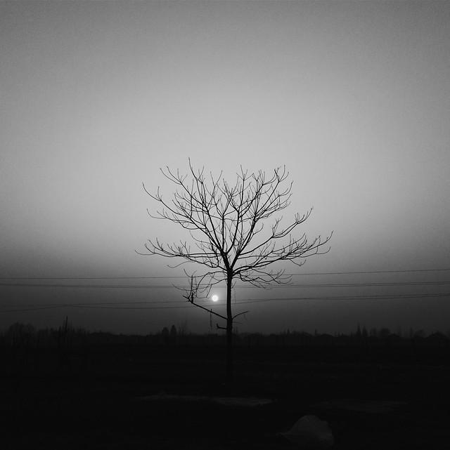 tree-landscape-fog-silhouette-no-person picture material