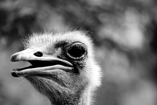 bird-wildlife-portrait-animal-eye 图片素材