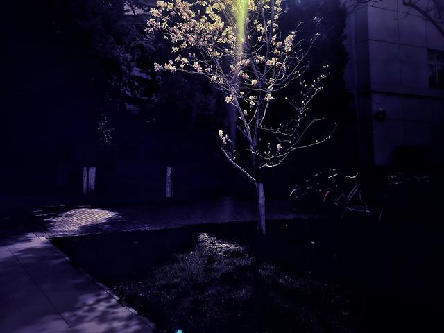 light-no-person-dark-landscape-tree picture material
