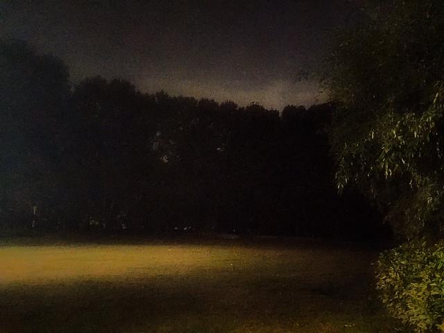landscape-tree-light-fog-no-person picture material