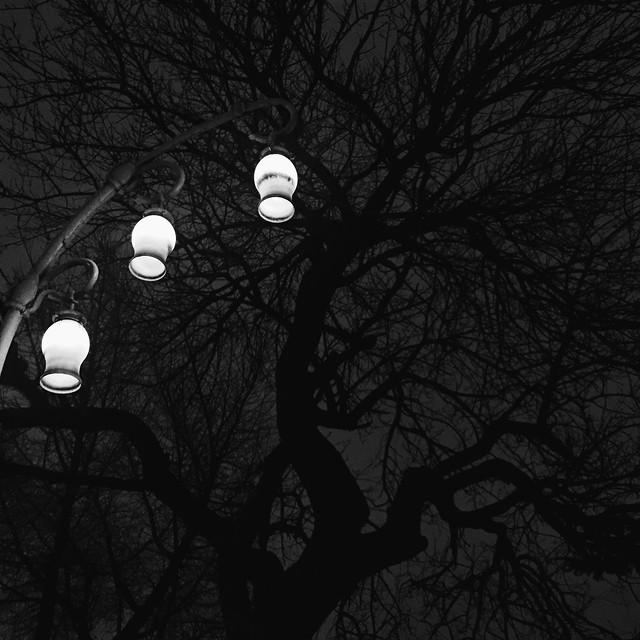 light-lamp-tree-winter-dark picture material