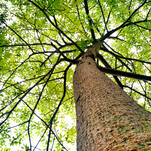 wood-tree-nature-leaf-no-person picture material