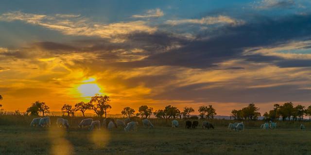 no-person-sunset-outdoors-dawn-evening 图片素材