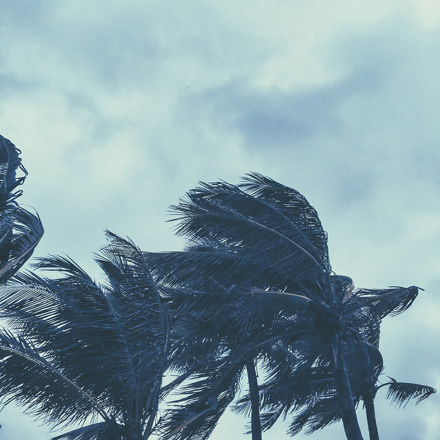 no-person-sky-travel-beach-tree picture material