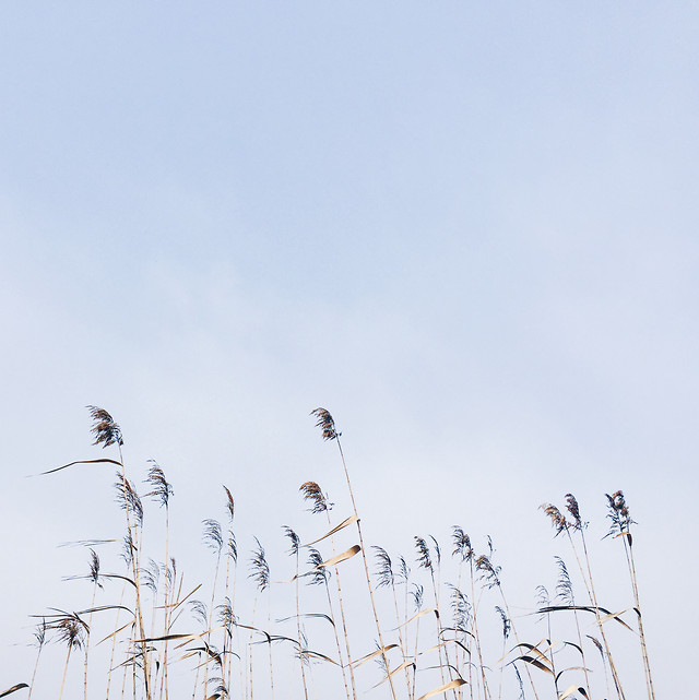 sky-bird-nature-winter-landscape picture material