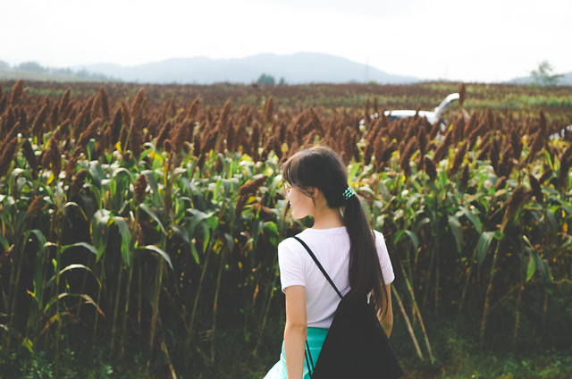 cropland-agriculture-crop-farm-food picture material