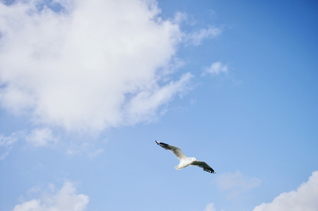 sky-nature-outdoors-no-person-bird picture material