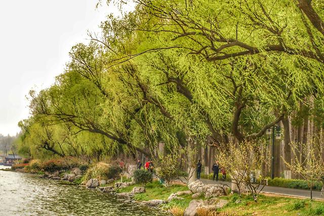 tree-nature-landscape-wood-park picture material