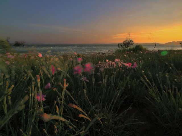 landscape-sunset-flower-dawn-sky picture material