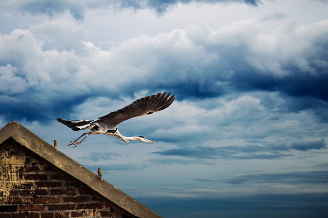 bird-sky-no-person-nature-seagulls picture material